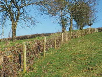 A Cornish hedge